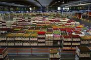 Dutch plants and flowers exports to UK rise in 2019